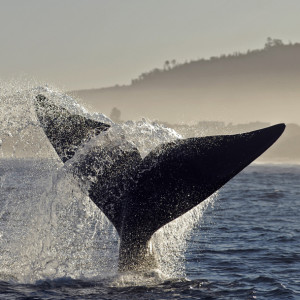 Cape Towns Whale Watching
